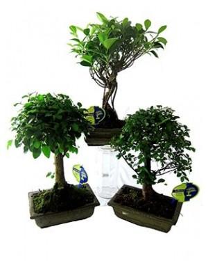 Planta natural