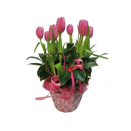 Solo tulipanes